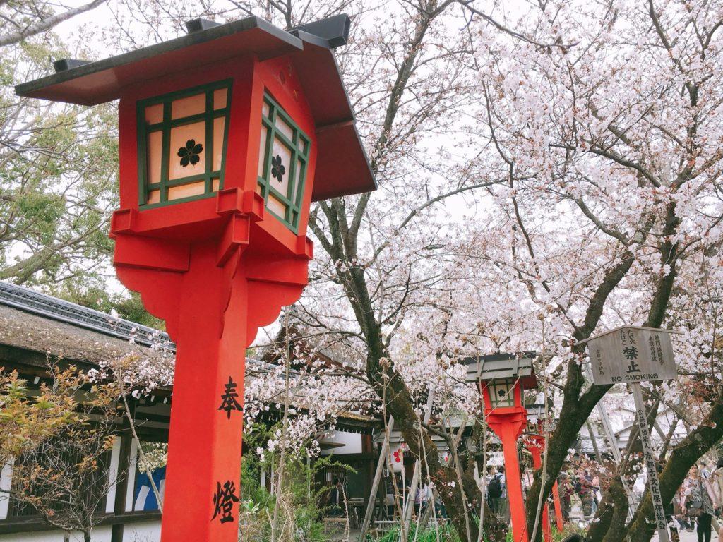 参拝前にチェック!京都・平野神社のご利益・見どころ簡単まとめ!かわいい桜のお守りやおみくじも紹介