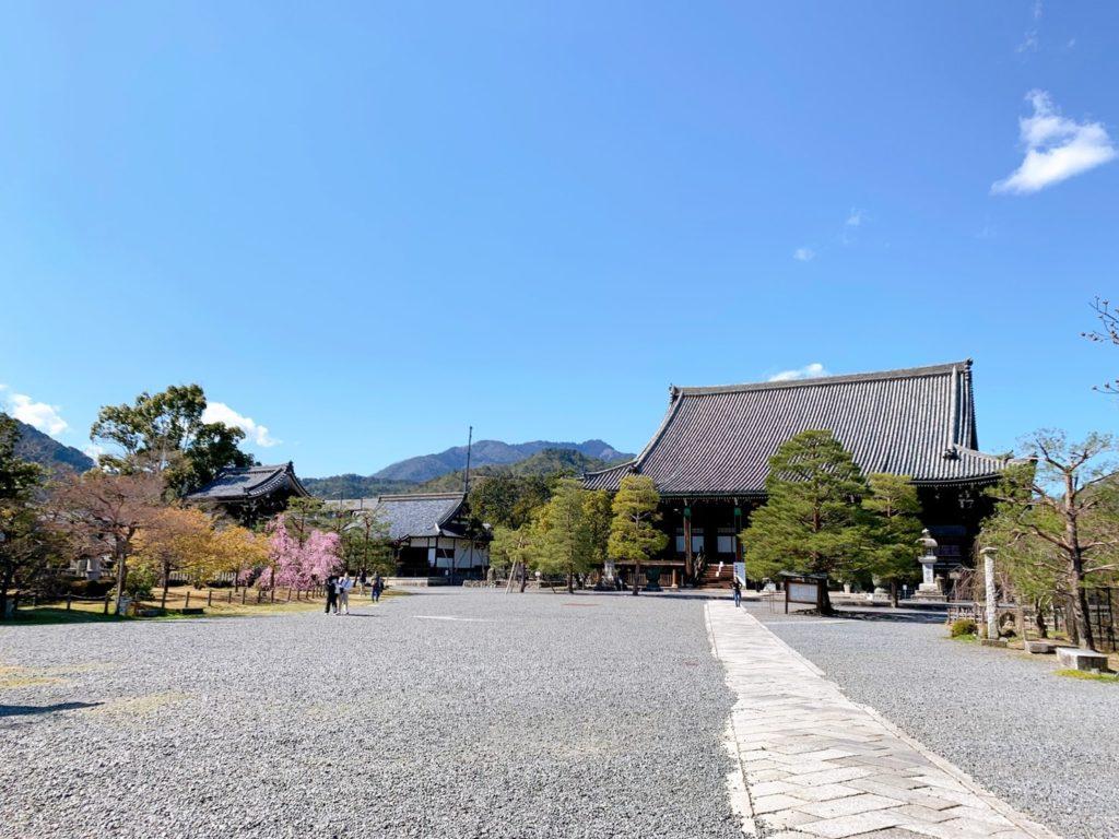 嵐山 清凉寺 桜 穴場