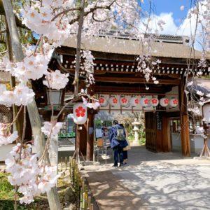 京都・平野神社2020年の桜の見頃(時期)と開花状況は?桜花祭・ライトアップ・桜茶屋もおすすめ!?桜の種類と開花時期も紹介