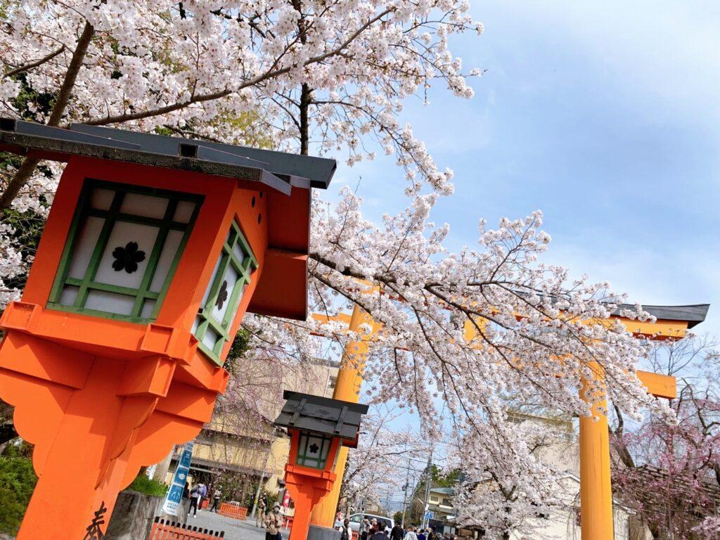 平野神社 桜 開花状況 見頃