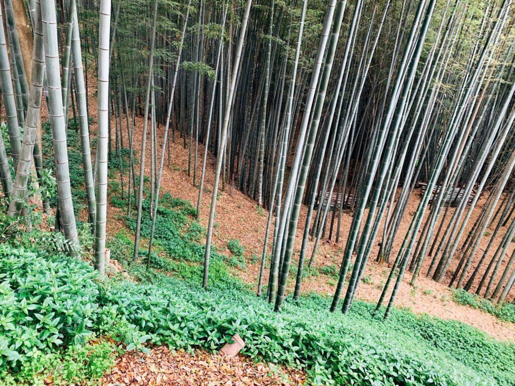 石清水八幡宮 竹